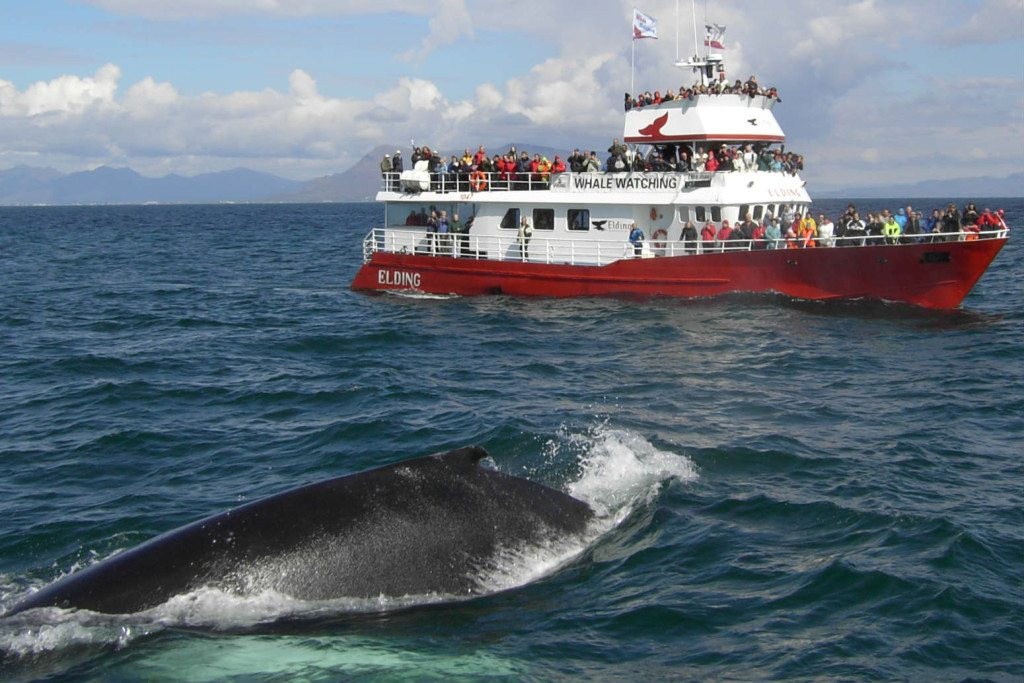 Helicopter and whale watching tour in Iceland